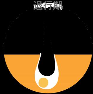 毛周期(ヘアサイクル)について説明する画像です。上側に「退行期」との見出しがあり、中には毛が抜けかかっている図があります。
