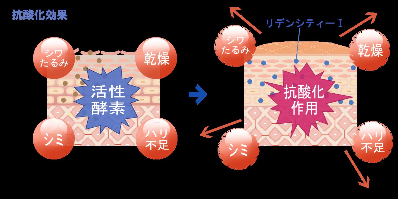 抗酸化作用により老け顔の原因を取り除く