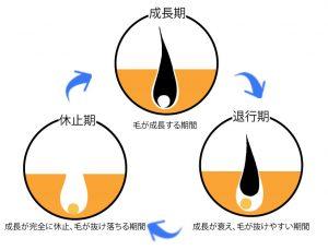 医療レーザー脱毛の治療の際に必要な知識である、毛周期について説明している図です。「成長期」「退行期」休止期」の毛の状態が書かれています。