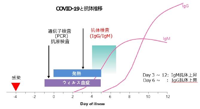 新型コロナウィルス抗体検査キットのIgM:IgGの推移図です